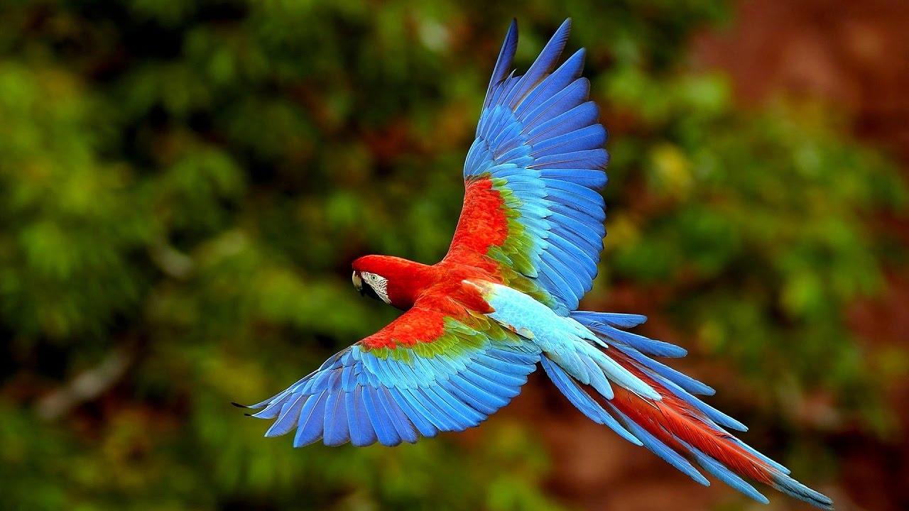 Самые умные виды птиц в мире
