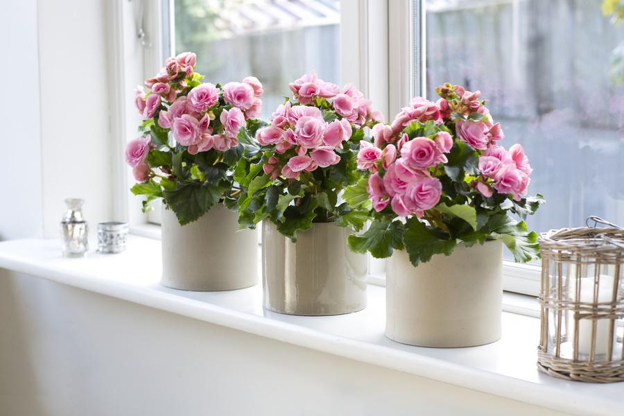 Растения, очищающие воздух в помещении