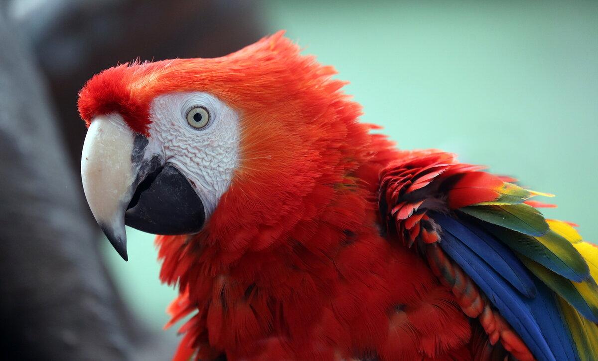Сколько лет живет попугай в домашних условиях?